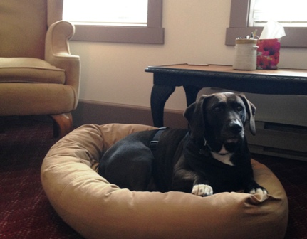 Georgy in her dog bed waiting for a counselling session to begin